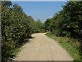 TQ0174 : Gravel pit access road by Alan Hunt