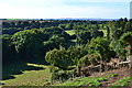 NZ1416 : View over the Tees valley from Winston Church by David Martin