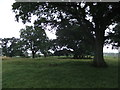 NY7713 : Great oaks at Great Musgrave by David Brown