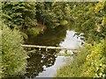 SE4017 : Lower Lake and Druid's Bridge by David Dixon