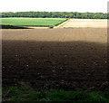 TG1034 : Fields by Wood Farm by Evelyn Simak