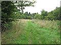 TQ7197 : Path through Crowsheath Community Woodland, Downham by Roger Jones