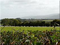 R5702 : Geese in field by derek menzies