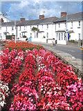 SS2006 : Flowerbed in Bencoolen Road by Rod Allday