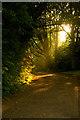 TQ2786 : Path in evening sun, Hampstead Heath by Jim Osley