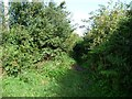 ST3196 : Entrance to overgrown but signposted public path by Christine Johnstone