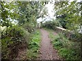 SX9398 : Bridge on former Exe Valley Line by David Smith