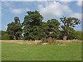 SU9574 : Old oaks, Windsor Great park by Alan Hunt