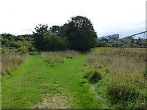 SJ6575 : Path junction in Anderton Nature Park by Raymond Knapman