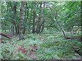 TL6402 : Stoneymore Wood, Writtle Forest by Roger Jones