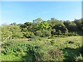 NS0168 : Woodland beneath Lenihall by Richard Webb