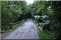 SW7114 : Bridge with huge wild rhubarb by David Lally