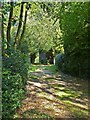 SP9207 : Path to St Laurence's church, Cholesbury by Rob Farrow