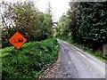 H0814 : Road at Miskaun Glebe by Kenneth  Allen