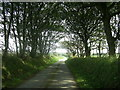 SM8426 : Tree-lined country road by Martyn Harries