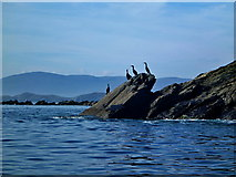 NB3100 : Cormorants and Sgeir a' Bhataidh by Toby Speight