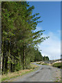 SN8156 : Forestry road in Coed Nantyrhwch, Powys by Roger  Kidd