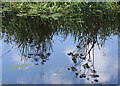 NT0875 : Reflected Umbellifers by Anne Burgess