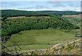 SN8055 : Tywi forest by Cwm Tywi, Ceredigion by Roger  Kidd