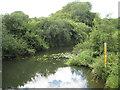 TQ1133 : River Arun at Alfoldean Bridge (2) by Nigel Cox