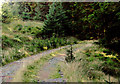 SN8054 : Forestry road in Coed Nantyrhwch, Powys by Roger  Kidd