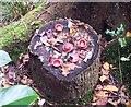 SP9107 : Fairy picnic with sad fairies by Rob Farrow