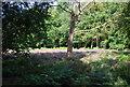 TQ4469 : Open woodland, Chislehurst Common by N Chadwick