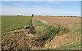 TF4287 : Overgrown Drain off Thacker Bank by J.Hannan-Briggs
