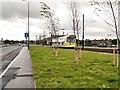 SJ9198 : Ashton Moss Tramway by David Dixon