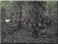SO9094 : Sedgley Coppicing by Gordon Griffiths