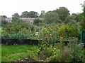 NZ0863 : Allotments south of Ovingham by Andrew Curtis
