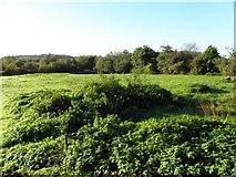 H0409 : Drumhubbrid Townland by Kenneth  Allen