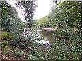 TQ2272 : Queens Mere Pond, Wimbledon Common by Paul Gillett