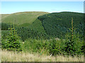 SN8256 : Coniferous forest in Cwm Irfon, Powys by Roger  Kidd