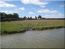 SP9122 : Grand Union Canal: Farmland near Grove by Nigel Cox