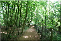 TQ3935 : Sussex Border Path, Busses Wood by N Chadwick