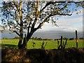 C3126 : Tree, Grange by Kenneth  Allen