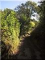 SX3661 : Green lane at Steplake by Derek Harper