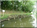 SU1661 : Partially repaired canal bank strengthened with wattle by Christine Johnstone