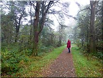 H5776 : Woodland path along Loughmacrory Lough by Kenneth  Allen