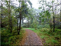 H5776 : Fallen leaves along the Loughmacrory path by Kenneth  Allen