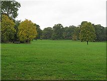 TL6804 : Trees in Hylands Park by Roger Jones