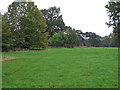 TL6803 : Hylands Park by Roger Jones