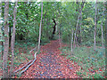 TL6703 : Path in Tower Belt, Hylands Park by Roger Jones