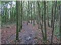 TL6704 : Path in Writtle Bank, Hylands Park by Roger Jones
