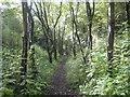 SP7052 : Tiffield: Former Northampton & Banbury Junction Railway trackbed by Nigel Cox