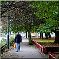 SO9797 : Leafy sidewalk in Willenhall, Walsall by Roger  Kidd