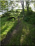 NS4984 : Path beside entrance of Finnich Glen by Lairich Rig