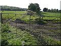 SE0820 : Bradley Lane, Elland FP38 (branch) by Humphrey Bolton