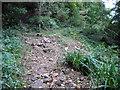 NZ7017 : Debris  strewn  footpath  in  Castle  Wood (2) by Martin Dawes